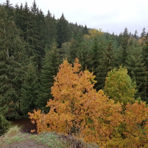 Podzimky 5.jpg